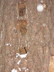 woodpecker 064