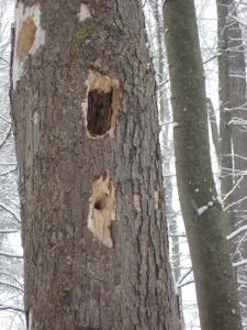woodpecker 070